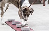 rescued dogs learn to sniff out bird flu