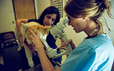 veterinary communication