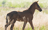 Version 2 (2020) of the Foal Formulary and Field Protocol now Available