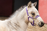 erl foal formulary