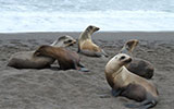 sea lions, dr. ron tjalkens, neurology, neuroscience, marine mammal center