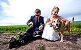 here comes the dog, dog wedding