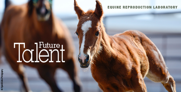 A foal at the Colorado State University Equine Reproduction Laboratory
