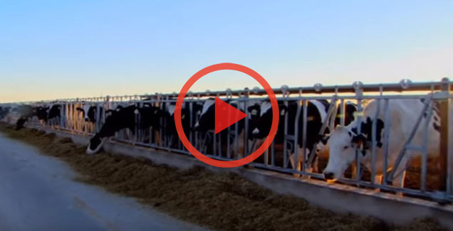 human and animal dairy safety training