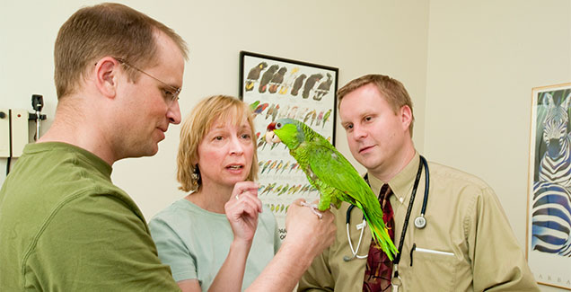 Dr. Johnston examines a bird