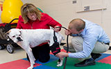 Small animal rehabilitation, small animal sports medicine, veterinary