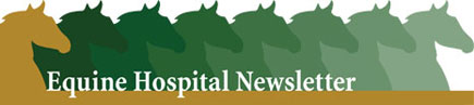 Equine medicine and surgery newsletter issues