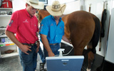 Equine sports medicine researchers with horse