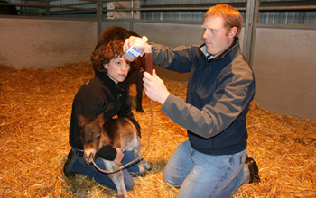 ERL Resident Ryan Ferris with a miniature foal