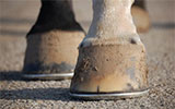 hoof notes, new employees, happening at equine hospital