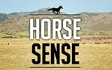 horses sense