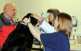 Dr. Powell and Maggie on ACVO eye exam day