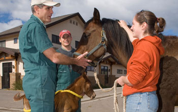 Patrick McCue with students and Horses