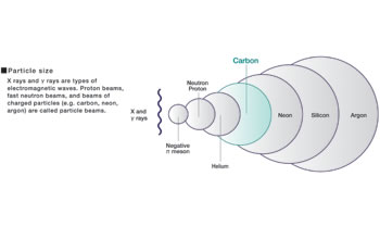This diagram illustrates the relative sizes of particles including protons and carbon ions. Photons (X- and γ-rays) are massless, electromagnetic waves. The large carbon ions create more complex DNA damage than photon radiation, accounting for their unique tumor-killing properties.
