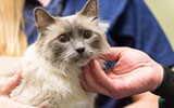 hairball awarness day april 25, rebeccca ruch-gallie, community practice, cat, feline