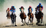 orthopaedic research center, dr. c wayne mcilwraith, research, equine, horse racing