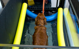 small animal underwater treadmill