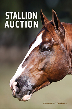 stallion auction