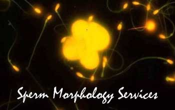Sperm Morphology Services