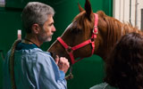 equine professor with horse at CSU Veterinary Teaching Hospital