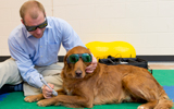 Zach getting laser therapy